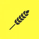 Ny forskning om glutenintroduktion och celiaki nyanserar Livsmedelsverkets råd